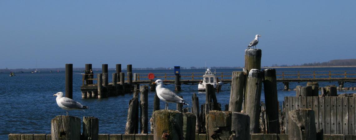Möwen am Pier